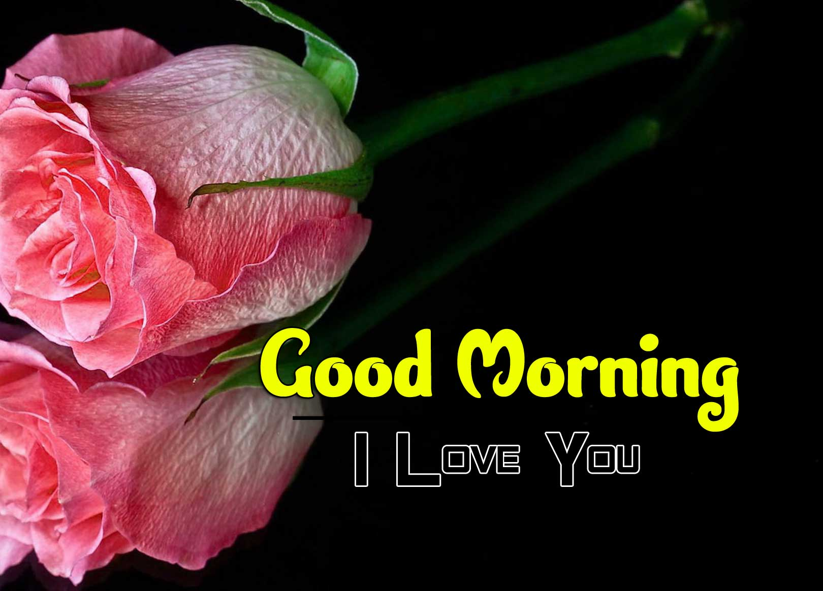 235+ Best Latest Good Morning Images Wallpaper Photo Pics HD