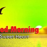 new bird good morning images photo hd