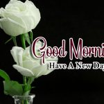 new nice rose good morning images photo download