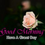 new nice rose good morning images pics download