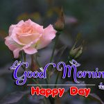 new nice rose good morning images pics hd