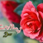 new nice rose good morning images wallpaper download