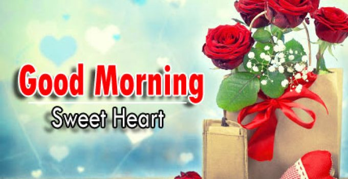 new rose Good Morning Images pics download