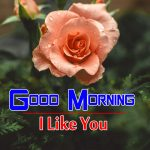 new rose Good Morning Images pics photo hd