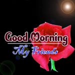 new rose Good Morning Images pictures photo for download