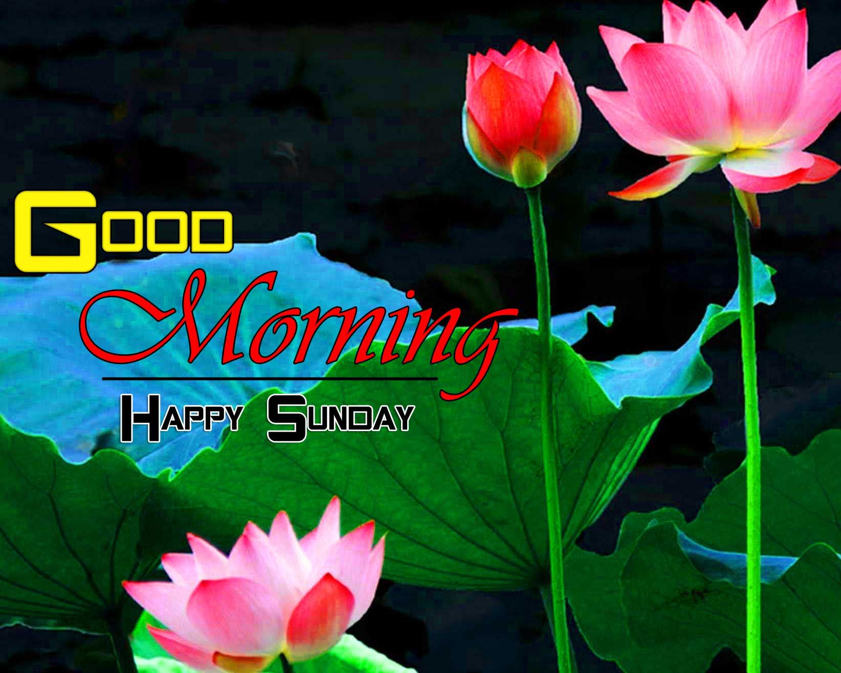 Cute Good Morning Hd Images Free