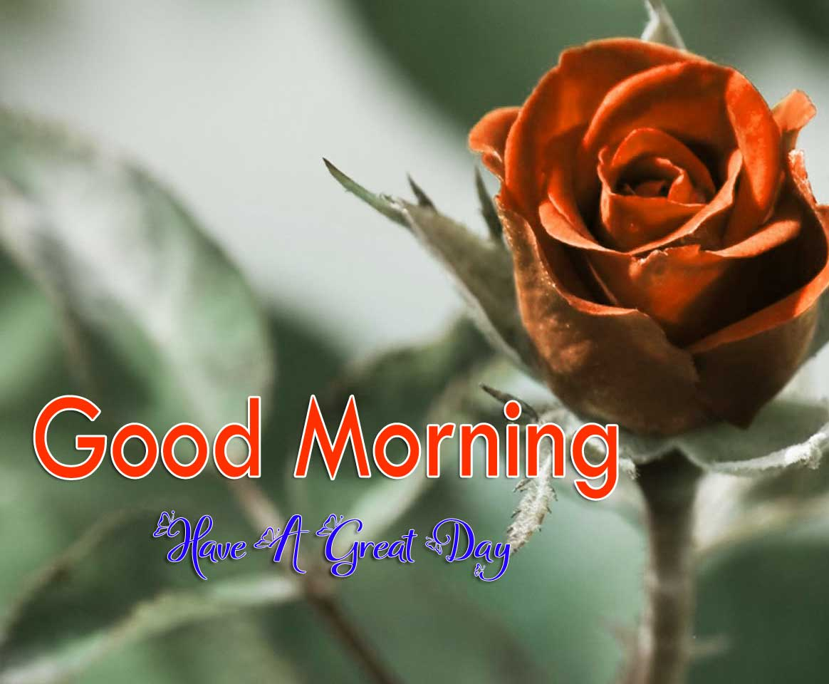 Cute Good Morning Images Pictures