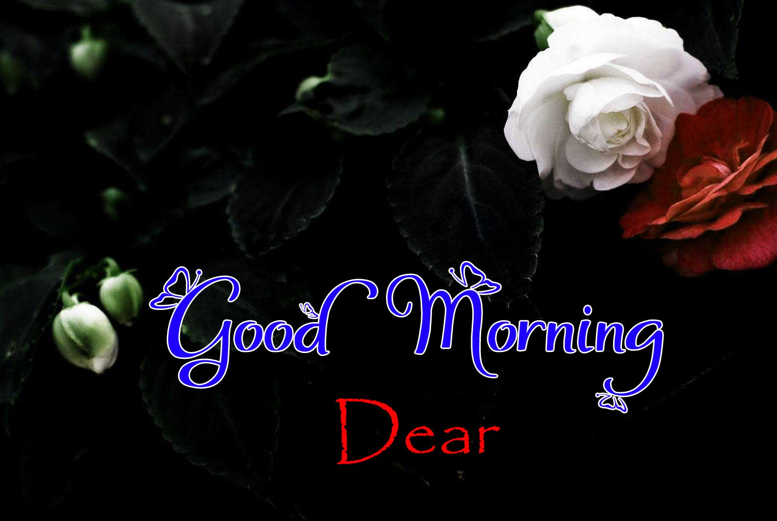 Cute Good Morning Pictures Images