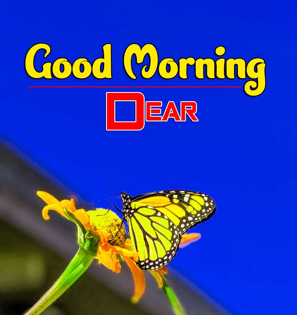 gud mrng images Photo Pics Pictures Free Download