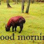 144+ Animal Good Morning Images Photo HD Download