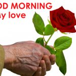 147+ Good Morning Images HD Download With Red Rose