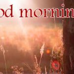 211+ Sunshine Good Morning Images HD Download