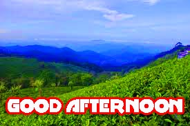 Good Afternoon Images Wallpaper pics Download for Whatsaap