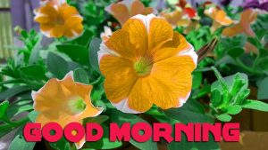 Latest Good Morning Images Photo Pics Download for Best Friend