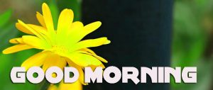 Latest Good Morning Pictures Photo Pics HD Download