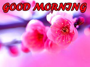 Best Latest Good Morning Pictures Images Photo HD With Flower