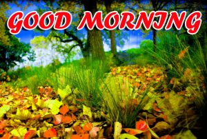 Best Latest Good Morning Photo Images Pictures Download For Whatsapp