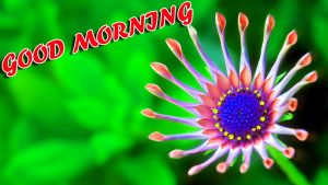 Best Latest Good Morning Wallpaper Photo Images Pictures HD