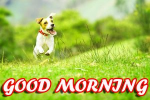 Best Latest Good Morning Pictures Images Photo HD Download