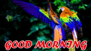 Best Latest Good Morning Images Pictures Photo Download