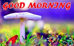 Best Latest Good Morning Pictures Images Photo Download For Whatsapp