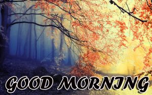 Best Latest Good Morning Images Pictures Download