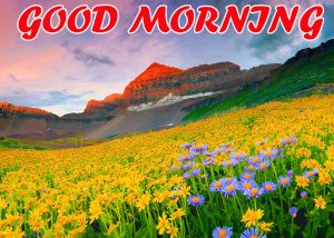 Best Latest Good Morning Photo Images Pictures HD For Best Friend