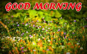 Best Latest Good Morning Images Photo Wallpaper For Whatsapp