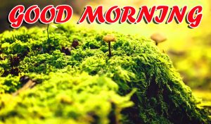 Best Latest Good Morning Photo Images Pictures Download