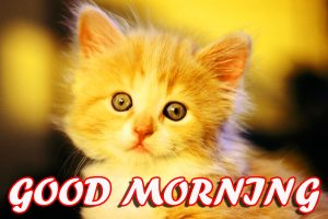 Best Latest Good Morning Pictures Photo Images Free HD