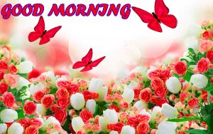 Best Latest Good Morning Images Pictures Photo HD