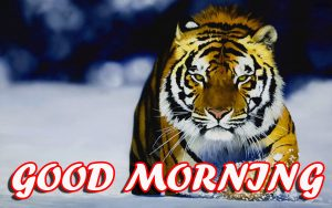 Best Latest Good Morning Wallpaper Photo Images HD