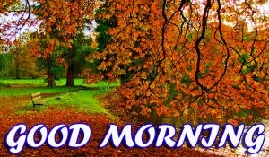 Best Latest Good Morning Wallpaper Photo Images HD Download