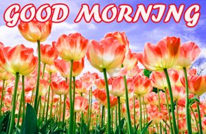 Best Latest Good Morning Pictures Images Photo HD For Best Friend
