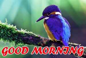 Best Latest Good Morning Pics Images Photo HD Download