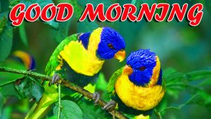 Best Latest Good Morning Images Photo Wallpaper Download