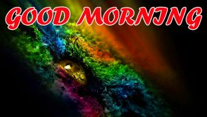 Best Latest Good Morning Wallpaper Photo Images Free HD