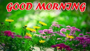 Best Latest Good Morning Pictures Images Photo HD For Facebook