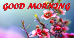 Best Latest Good Morning Pictures Images Photo HD