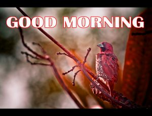 Amazing Good Morning Pictures Photo Images Download