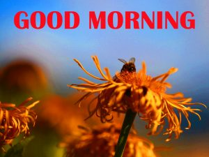Amazing Good Morning Photo Images Wallpaper For Facebook