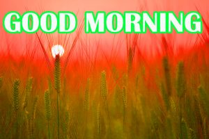 Amazing Good Morning Images Photo Wallpaper For Facebook