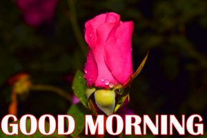 Amazing Good Morning Wallpaper Photo Pictures For Facebook