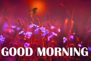 Amazing Good Morning Photo Wallpaper Images Download