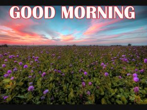 Amazing Good Morning Pictures Photo Wallpaper Free HD