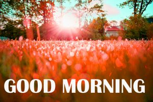 Amazing Good Morning Images Photo Wallpaper Download