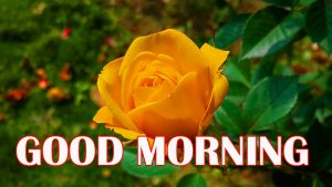 Amazing Good Morning Photo Images Pics For Whatsapp
