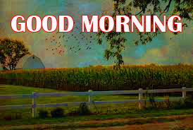 Amazing Good Morning Photo Wallpaper Pictures HD Download