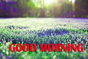 Amazing Good Morning Photo Pics Pictures Download