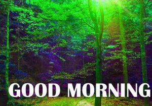 Amazing Good Morning Photo Images Pictures HD Download